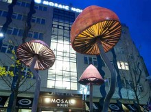 Mosaic front Mushrooms BEST